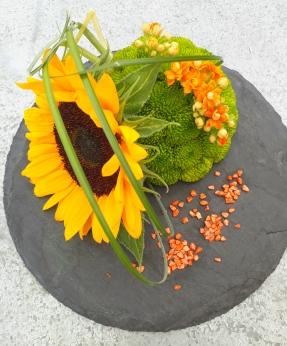Chrysanthèmes verts et soleil